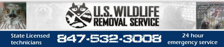Lake County Illinois Wildlife Removal