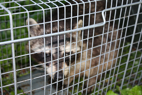 Wildlife Exclusion