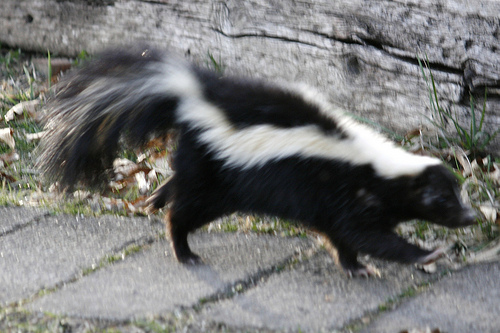 squirrel removal services near me