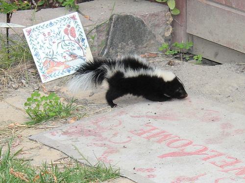Dead Animal Removal Company