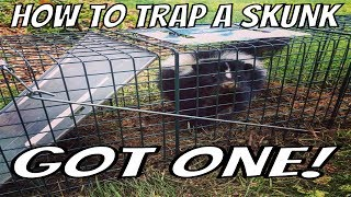 Humane Ingleside IL Raccoon Removal