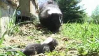 Humane Grayslake IL Raccoon Removal