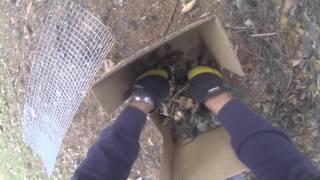 Humane Skunk Removal in Wauconda IL